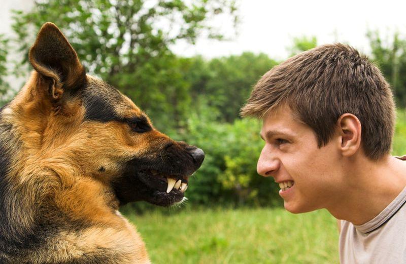 A képen kutya és vegán ember látható. Fogak, növényevő.
