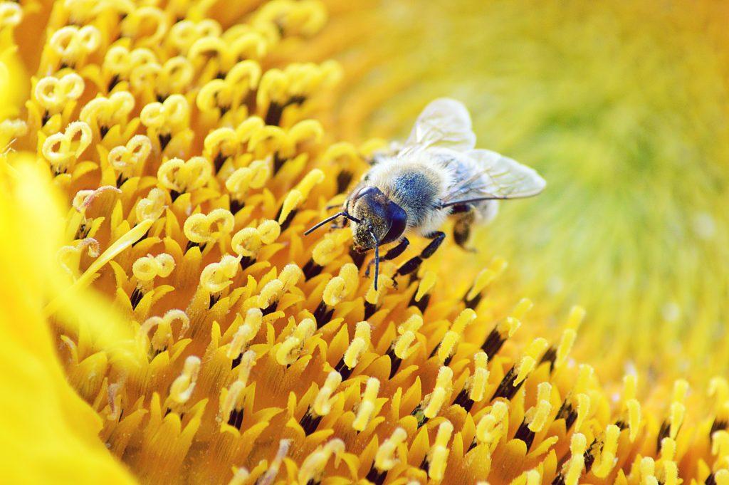 A képen egy méh található.